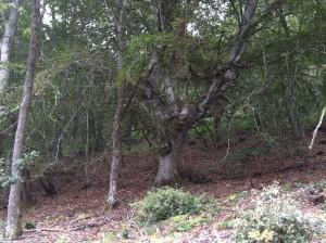 casa pasiva moncalvillo bosque