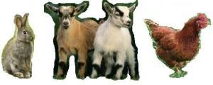 casa pasiva moncalvillo conejo gallina cabras enanas granja